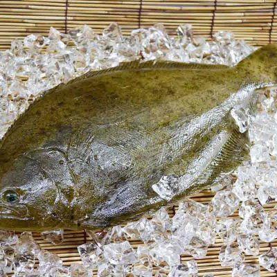 吃了会让人上瘾的鸦片鱼营养价值有哪些呢?
