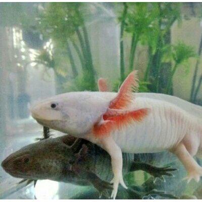想知道六角龙鱼怎么养吗?该如何安置六角龙鱼呢?这里有答案!